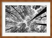 Looking Up I BW Fine-Art Print