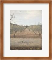 Jeremiah Olive Grove Fine-Art Print