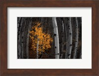 Light of the Forest Fine-Art Print