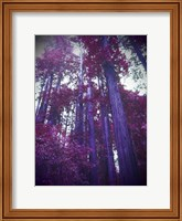Purple Tree Fine-Art Print