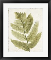 Forest Ferns I Antique Fine-Art Print