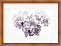 Orchid 1 BW Fine-Art Print