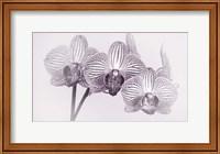 Orchid 4 BW Fine-Art Print