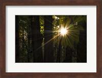 Leaf Peeping Sun Fine-Art Print