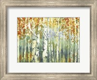 Abstract Birch Trees Warm Fine-Art Print