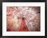 Autumn Forest Fine-Art Print