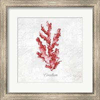 Red Sea Coral Fine-Art Print