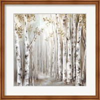 Sunset Birch Forest III Fine-Art Print
