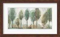 Tall Trees Fine-Art Print
