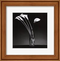Arums 1990 Fine-Art Print