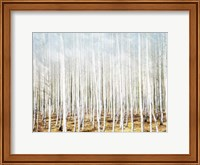 Birch In The Woods Fine-Art Print