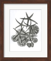 Sea Collection Fine-Art Print