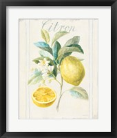 Floursack Lemon IV v2 Fine-Art Print