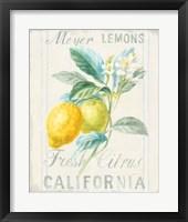 Floursack Lemon II Fine-Art Print