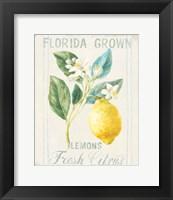 Floursack Lemon I Fine-Art Print