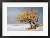 Fox And Winter Oak Fine-Art Print