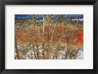 Red Yellow Willow Fine-Art Print