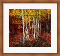 Aspen Forest Above Kelly Fine-Art Print