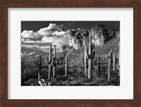 Superstition Mtn Saguaros Arizona Fine-Art Print