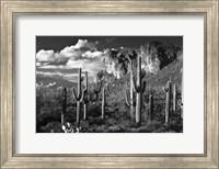 Superstition Mtn Saguaros Arizona Fine-Art Print