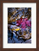 West Fork Creek Leaves Fine-Art Print