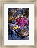 West Fork Creek Leaves Fine-Art Print