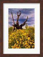 Desert Flowers With Tree Arizona Fine-Art Print