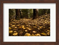 Aspen Leaves Bismark Trail Arizona Mtns Fine-Art Print