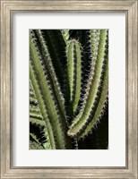 Saguaro Cactus Arms Fine-Art Print