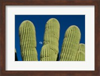 Color Saguaro Cactus Moon Arizona Superstition Mtns Fine-Art Print