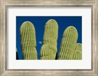 Color Saguaro Cactus Moon Arizona Superstition Mtns Fine-Art Print
