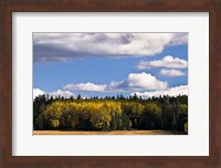 Escudilla Mountain Meadow Fall 2 Fine-Art Print