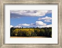 Escudilla Mountain Meadow Fall 2 Fine-Art Print