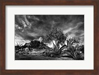 Sedona Juniper Tree 2 Fine-Art Print