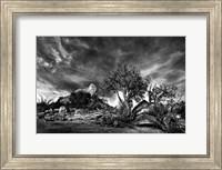 Sedona Juniper Tree 2 Fine-Art Print