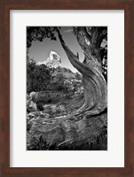 Sedona Juniper Tree National Forest Fine-Art Print