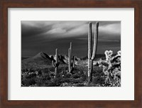Saguaros Superstition Mtns Arizona Fine-Art Print