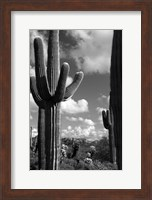 Arizona Superstition Mtns Saguaros 2 Fine-Art Print