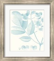 Botanical Study in Spa V Fine-Art Print