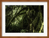 Mossy Tempered Forest Fine-Art Print