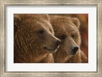 Brown Bears - Lazy Daze Fine-Art Print