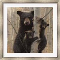 Black Bear Mother and Cubs - Mama Bear Fine-Art Print