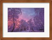 Winter Wonderland Fine-Art Print