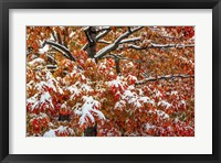 Seasons Of Change Fine-Art Print
