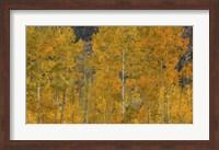The Flames Of Autumn Fine-Art Print