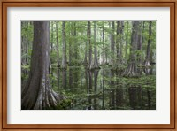 In the Swamp Fine-Art Print