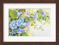 Trailing Vine Morning-Glories Fine-Art Print