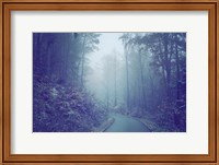 Blue Woods Misty Way Fine-Art Print